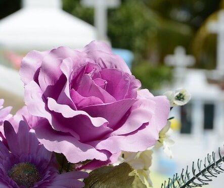 Blume - Hintergrund Friedhof